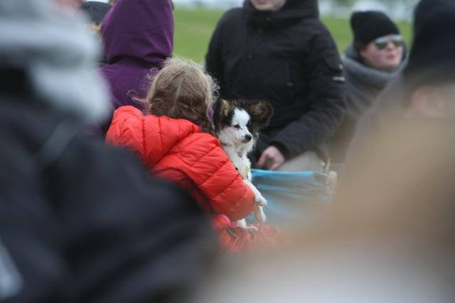 Även hundra kollar hingstar Foto: Karin Cederman/ishestnews.se