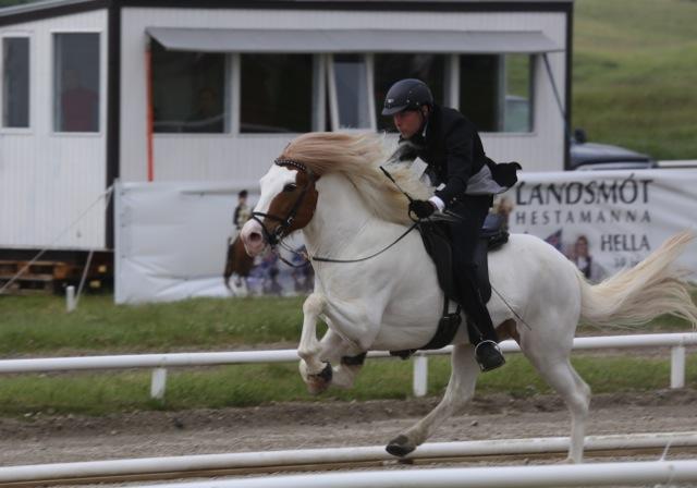 Alfursonen Lukku-Láki (Lucky Luke) höjde både traven och galoppen från 8.5 till 9.0. Tyvärr sänkte han skritten från 8.5 till 8.o.  Foto: Yvonne Benzian/ishestnews.se