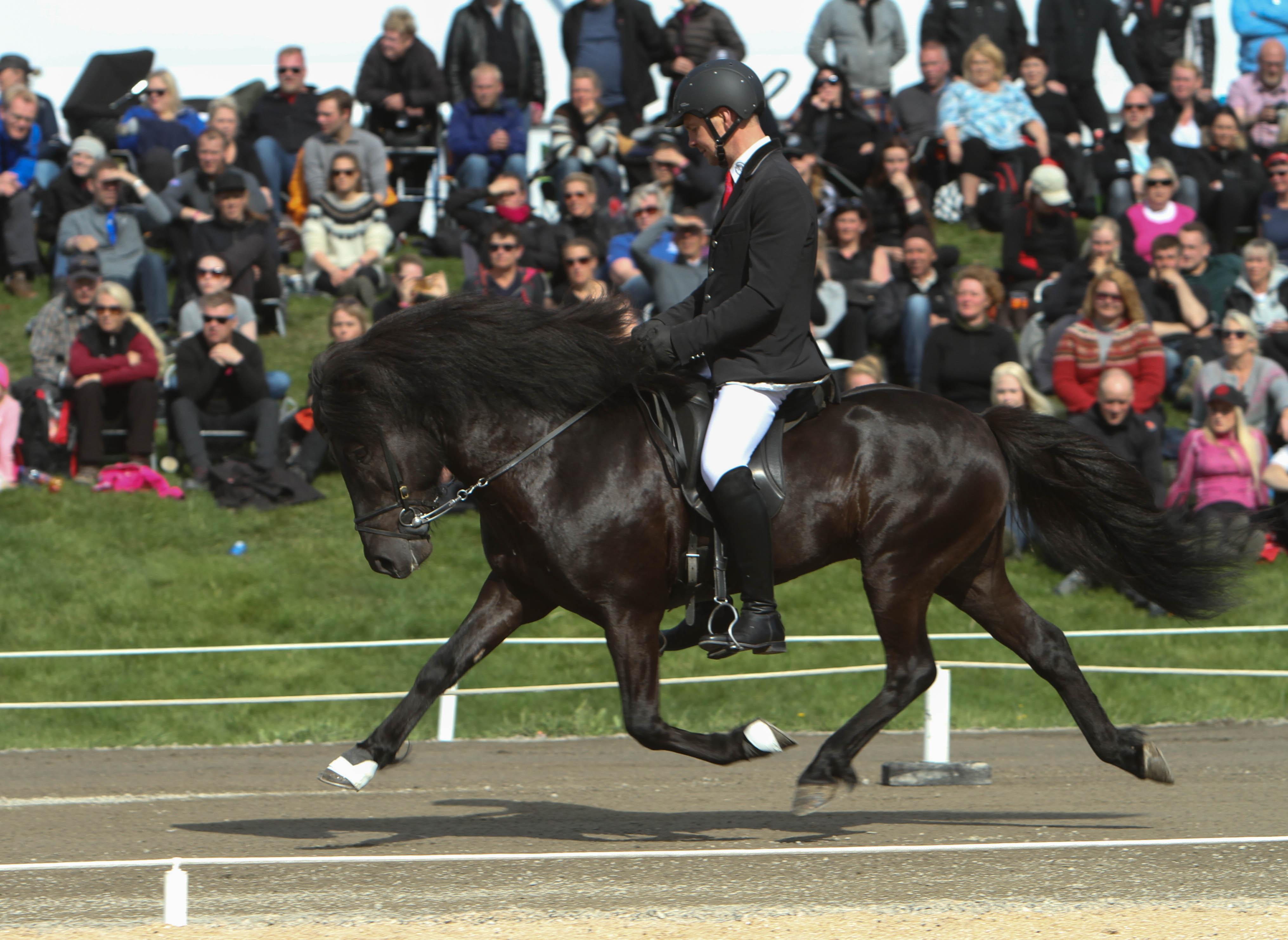 Sjódur frá Kirkjubae i trav, nu på 6:e plats Foto: Karin Cederman/ishestnews.se
