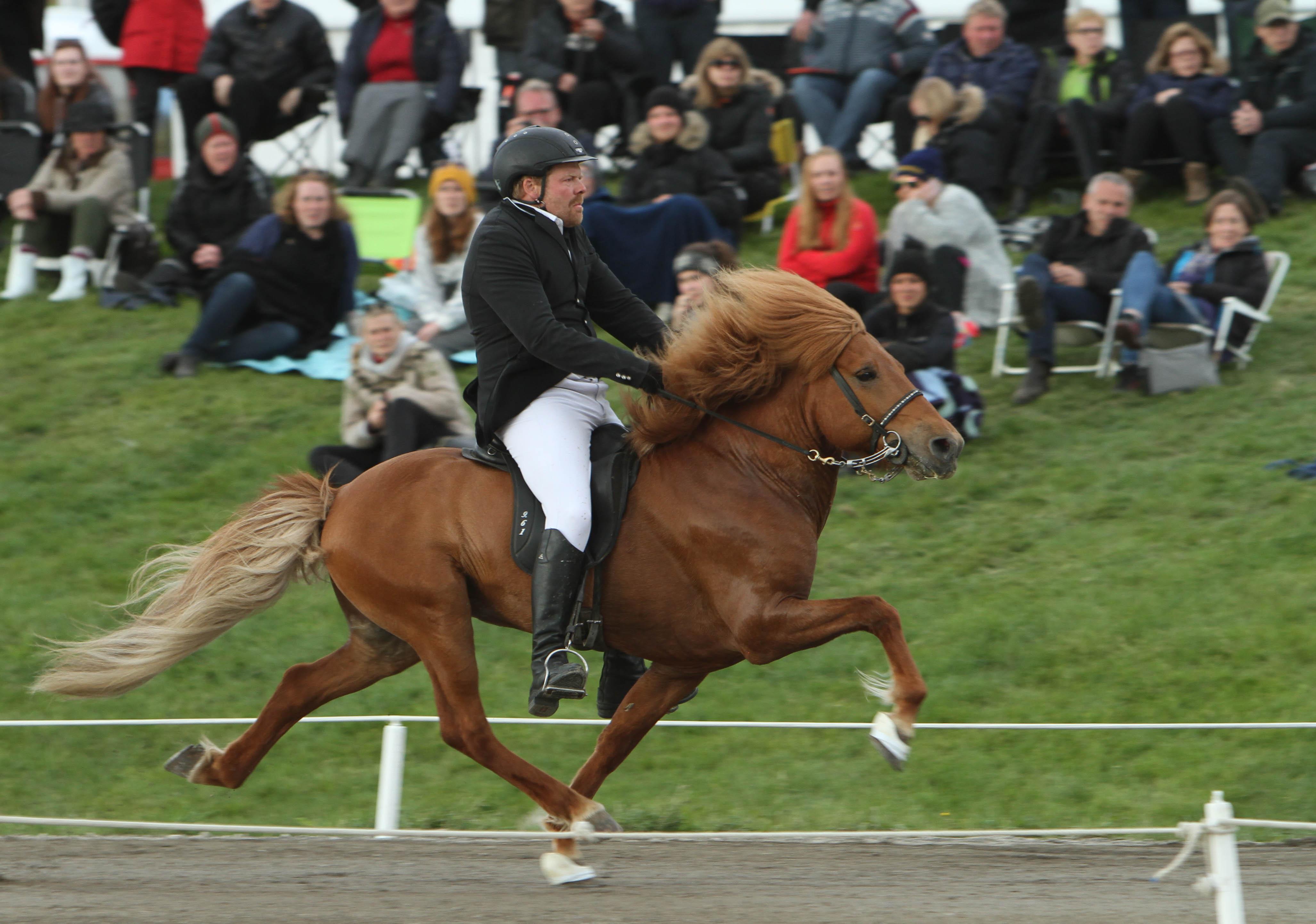 Thor frá Votumyri och Daniel Jónsson red upp sig från 17:e till 5 plats inför finalerna i A-flokk. Foto: Karin Cederman/ishestnews.se