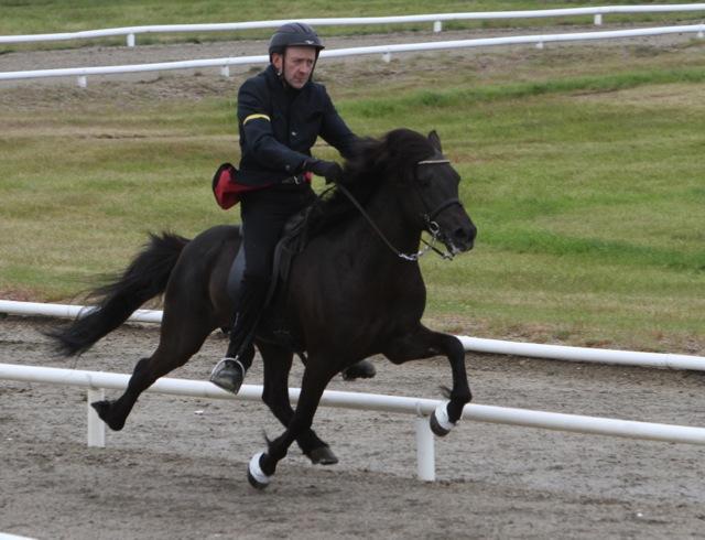 Trymbill, en passkanon! Foto: Karin Cederman/ishestnews.se
