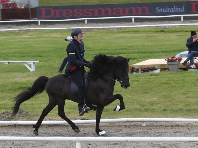 Trymbill och Gísli dansade fram i tölt också Foto: Yvonne Benzian/ishestnews.se