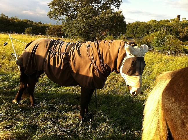 sommareksem häst behandling