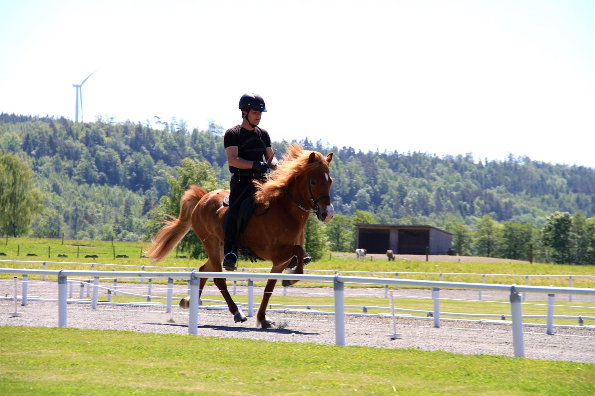 Erlingur Erlingsson visar en av de många hästar han har med sig denna helg
