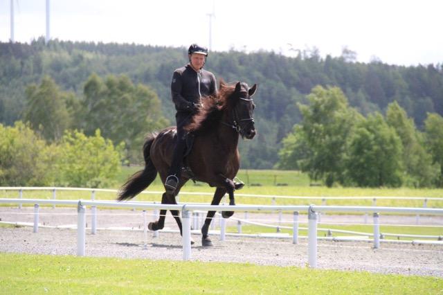 Tinna frá Þóroddsstöðum med Magnus Skúlasson i sadeln, hela 9 för pass! Foto: Johanna Wingstrand