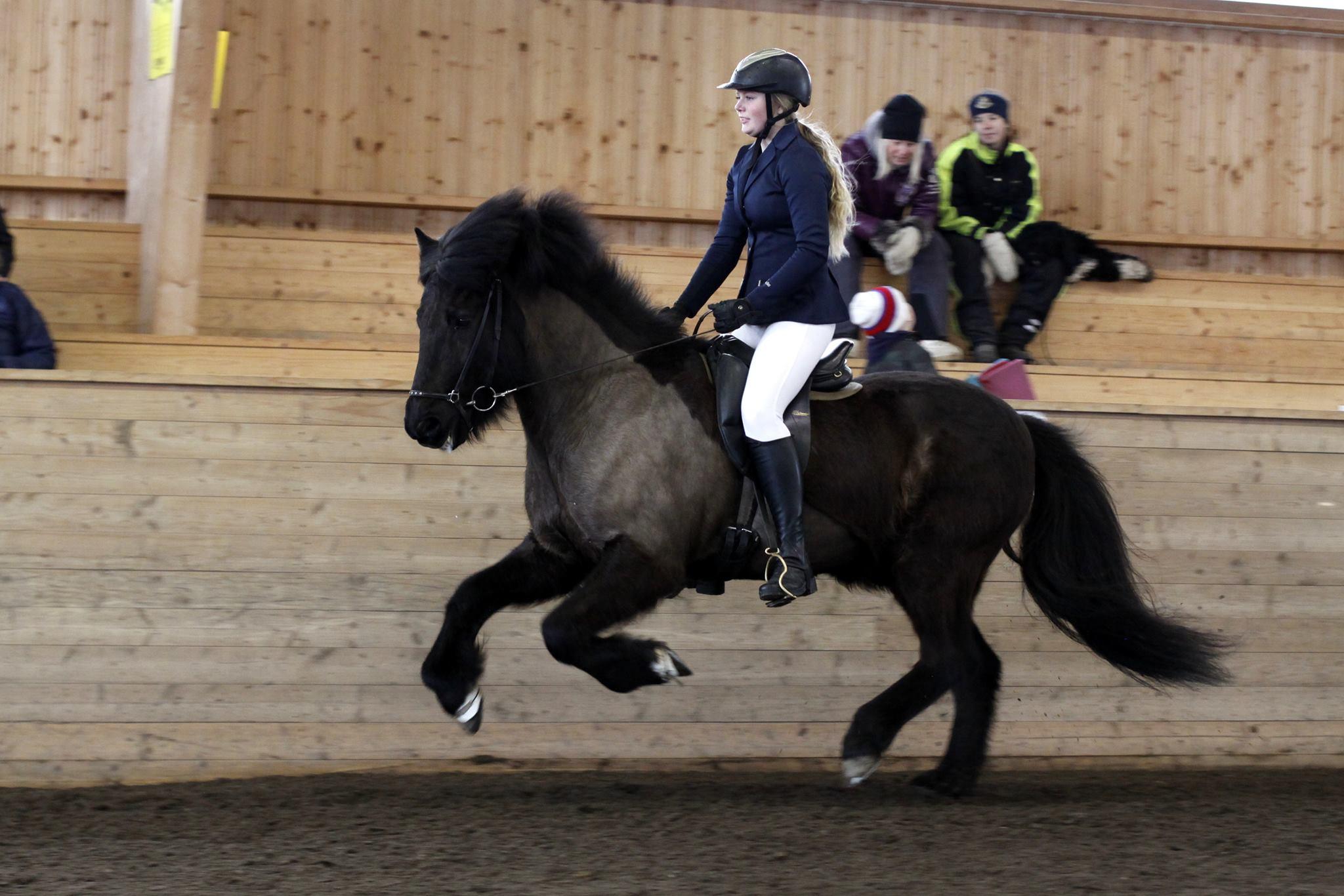 Ellinor Sollander (youngrider) med hästen Svadilfari. Ellinor fick Feather Prize YR för harmonisk ridning. Foto: Matilda Persson