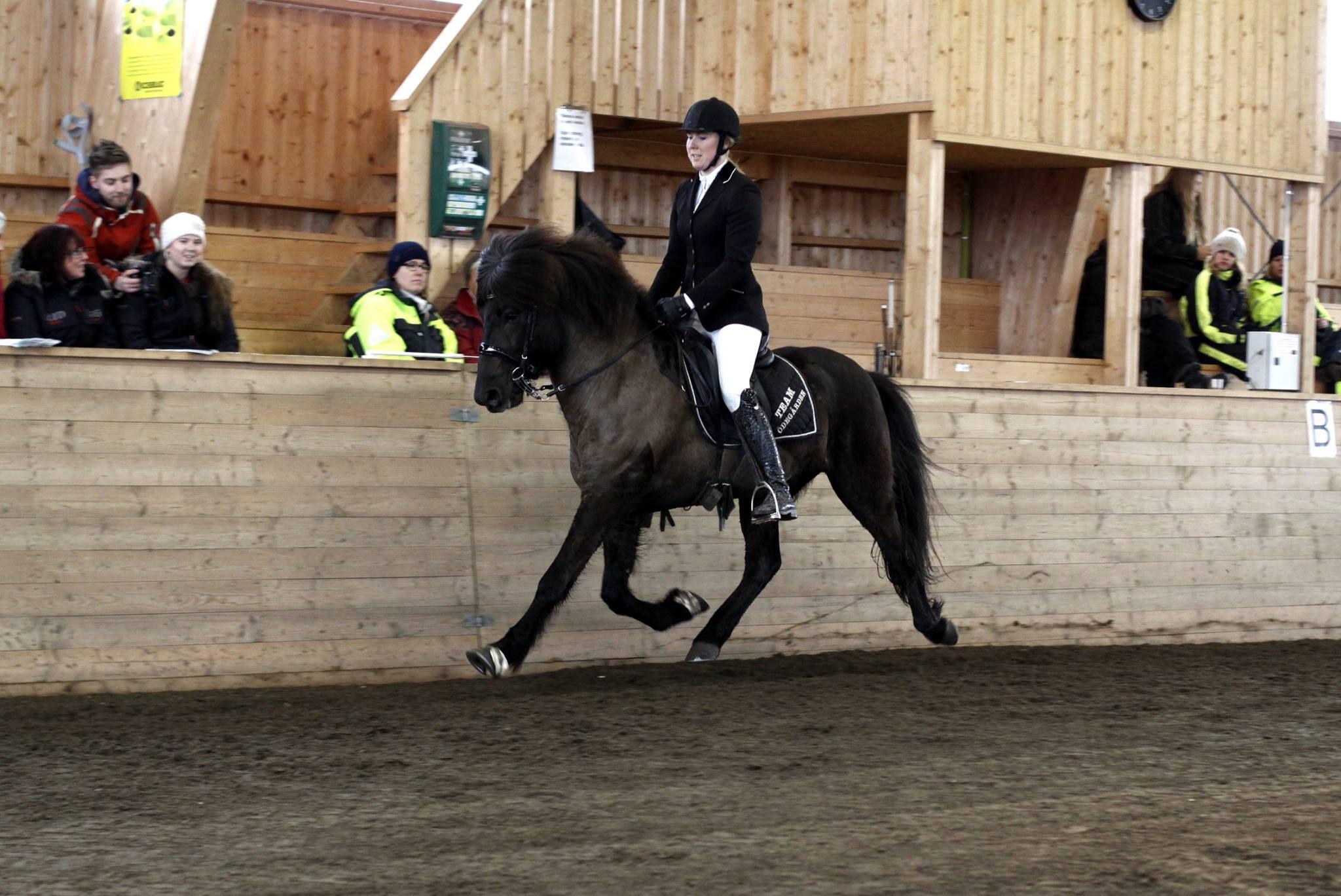 En av ryttarna som utmärkte sig resultatmässigt under dagen var Madelen Johanson som lyckades nå förstaplaceringen i både V5 och V1 under denna uttagningsdag med hästarna Fagur från Skärmnäs (V1) och Keila från Hvidagården (V5). Madelen fick även deltävlingens pris för bästa senior. Foto: Matilda Persson