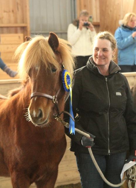 Alfons från Niska, vinnare av klassen Unghingstar 1 år Foto: Eva Lodfeldt/ishestnews.se