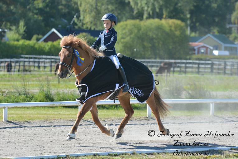 Alfons och Djörfung kvalade till SM Foto: Zanna Hofvander