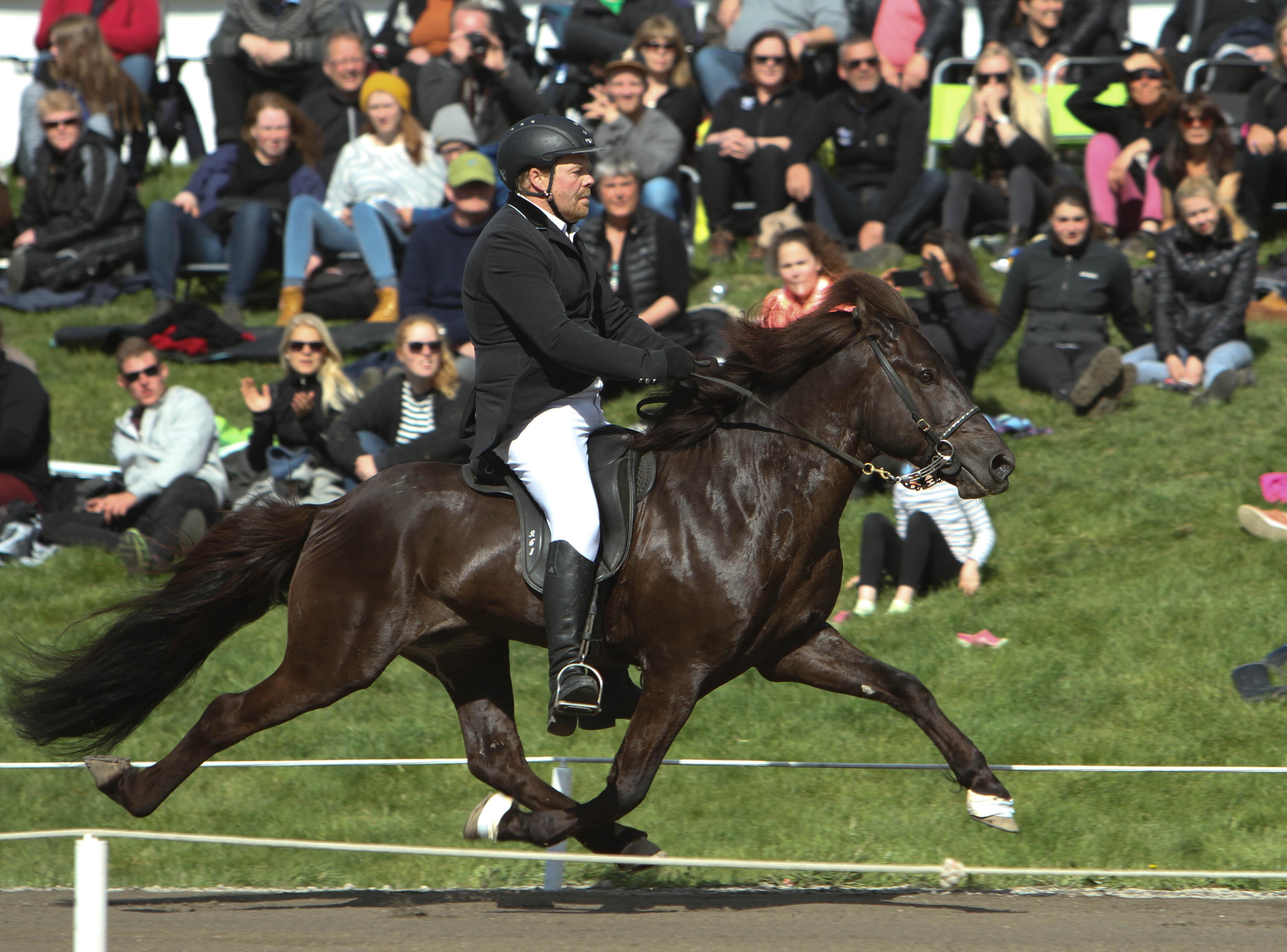 Arion i pass! Foto: Karin Cederman/ishestnews.se