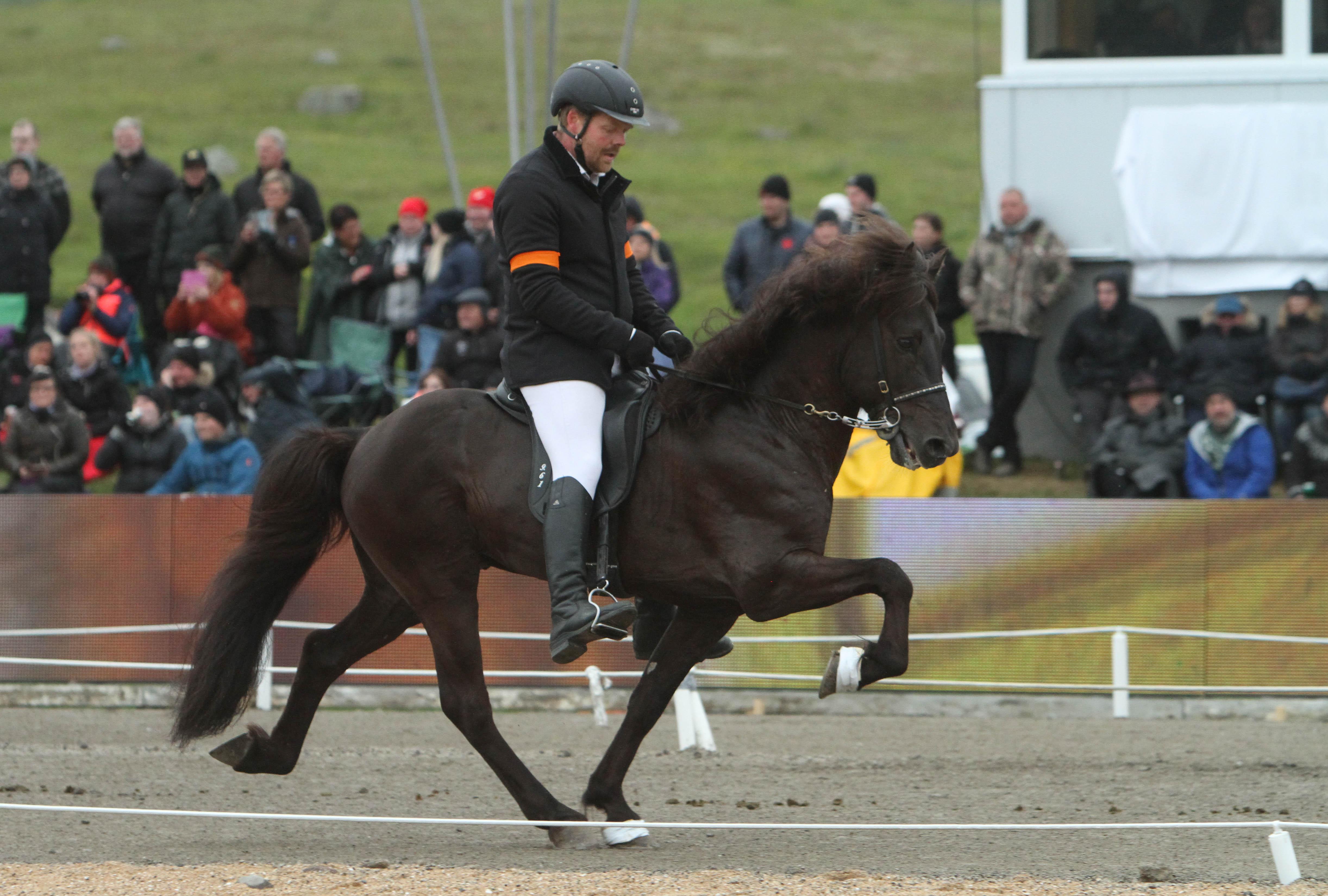 Tvåan Arion i tölt Foto: Karin Cederman/ishestnews.se