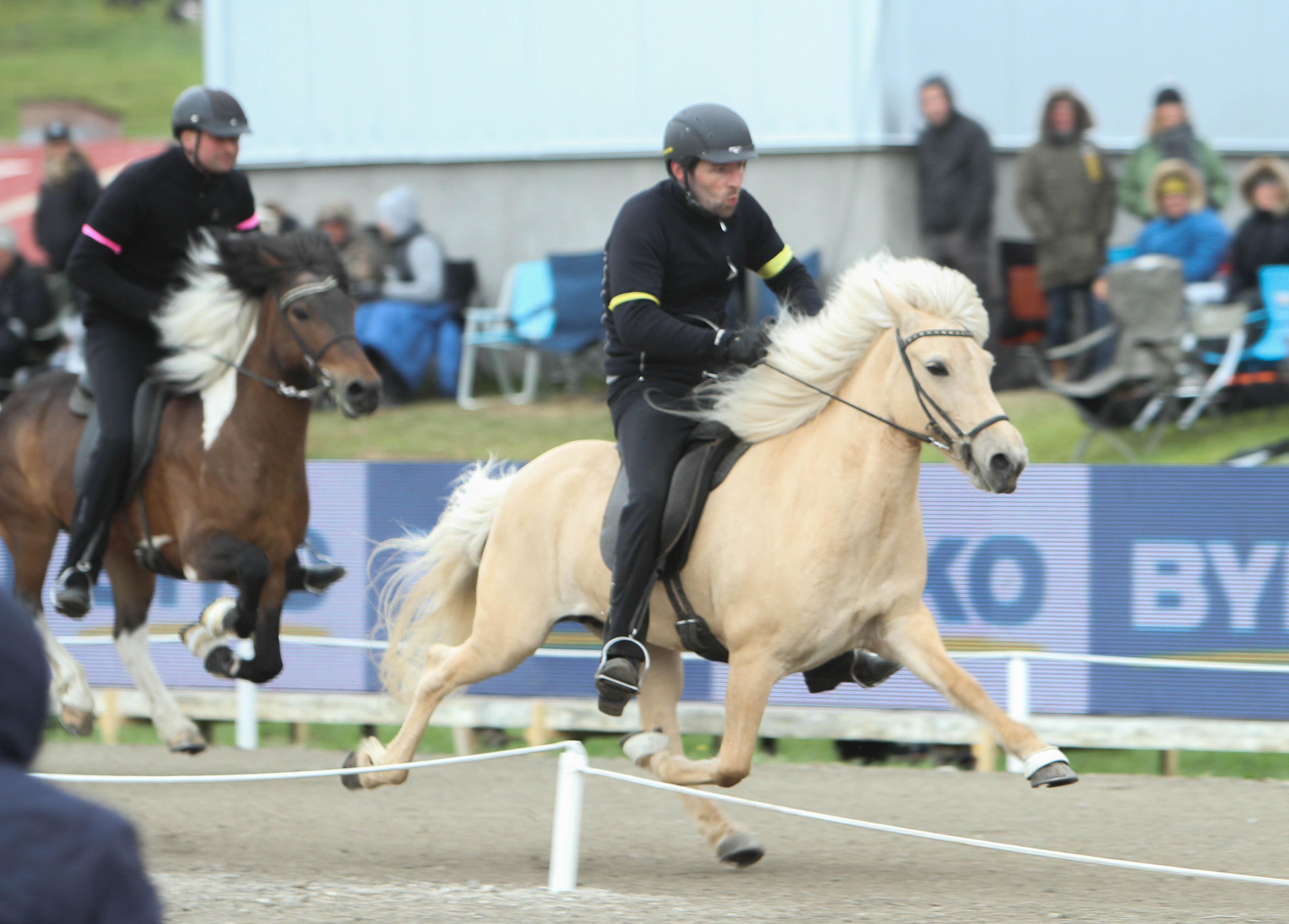Tävlingens allra sista race blev avgörande. Árni Björn och Korka höll passen hela vägen och förbättrade sin tid till 13,86 vilket ledde till seger! Foto: Karin Cederman/Ishestnews.se