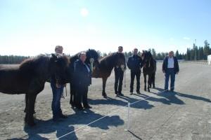 FIna hästar med glada ägare. Bästa 5-, 6- och 7 år och äldre ston. Foto: VitaVillan