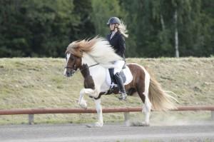 Svensk mästare i GDY Linda Nilsson och Gneisti från Hvidagården 8,352 Foto: Malin Wengdahl/wengdahl.se