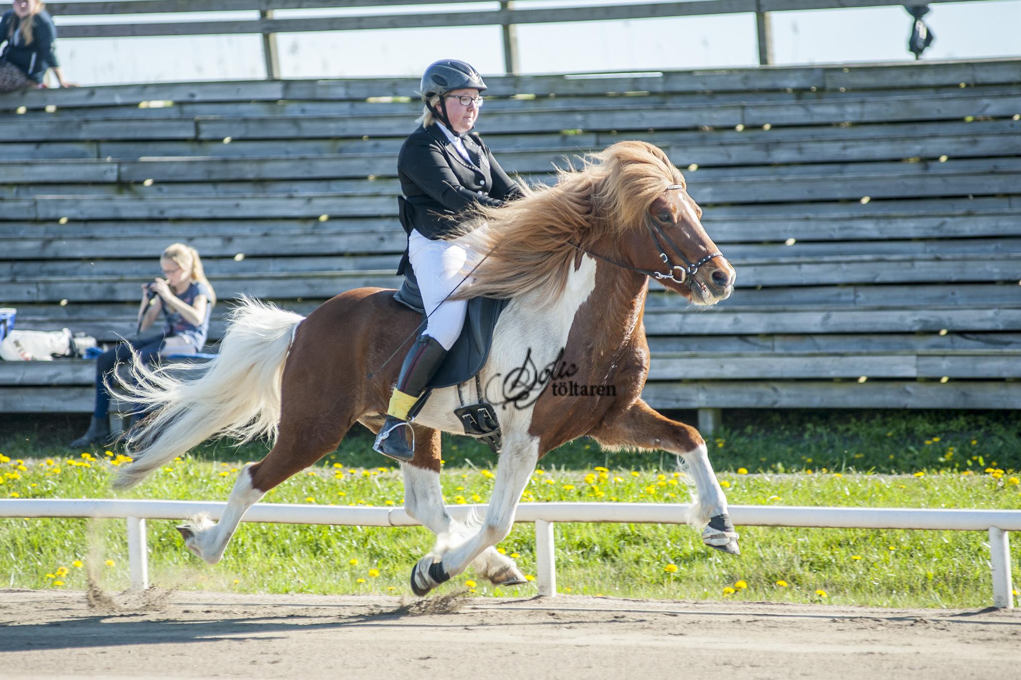 ...och Stina och Brestur gjorde samma prestation i B-finalen i F1 Foto: Sofie Lahtinen Carlsson