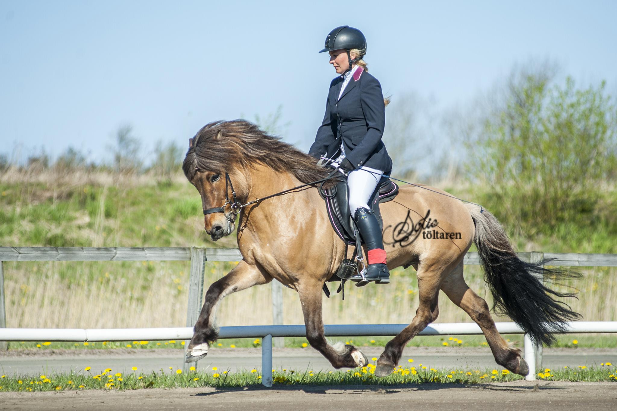Louise Löfgren och hennes nya stjärna Dágfari vann B-finalen i Foto: Sofie Lahtinen Carlsson