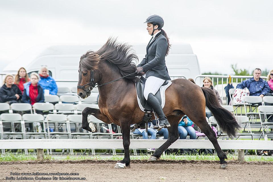 Malin Wikander på Bangsi från Örvik. Båda ekipagen fick 6.60 och ligger på delad 4:e plats. Foto: Sofie Lahtinen Carlsson (www.toltaren.wordpress.com)