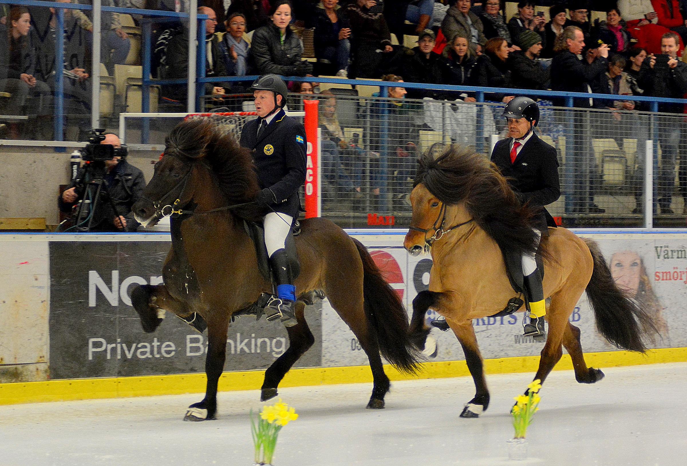 Två världsmästare i tölt möts igen – Vignir Jónason och Jóhann R Skúlason under uttagningen på 2015 års Tölt on Ice (foto: Treell Photo)