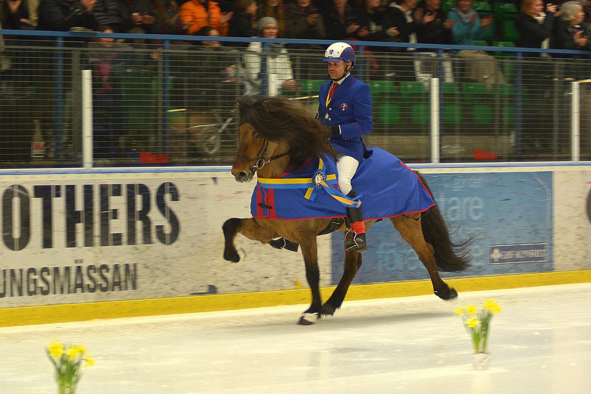 Jóhann R Skúlason segrade i 2015 års Tölt on Ice på sin fantastiska häst Hnokki frá Fellskoti (foto: Treell Photo)