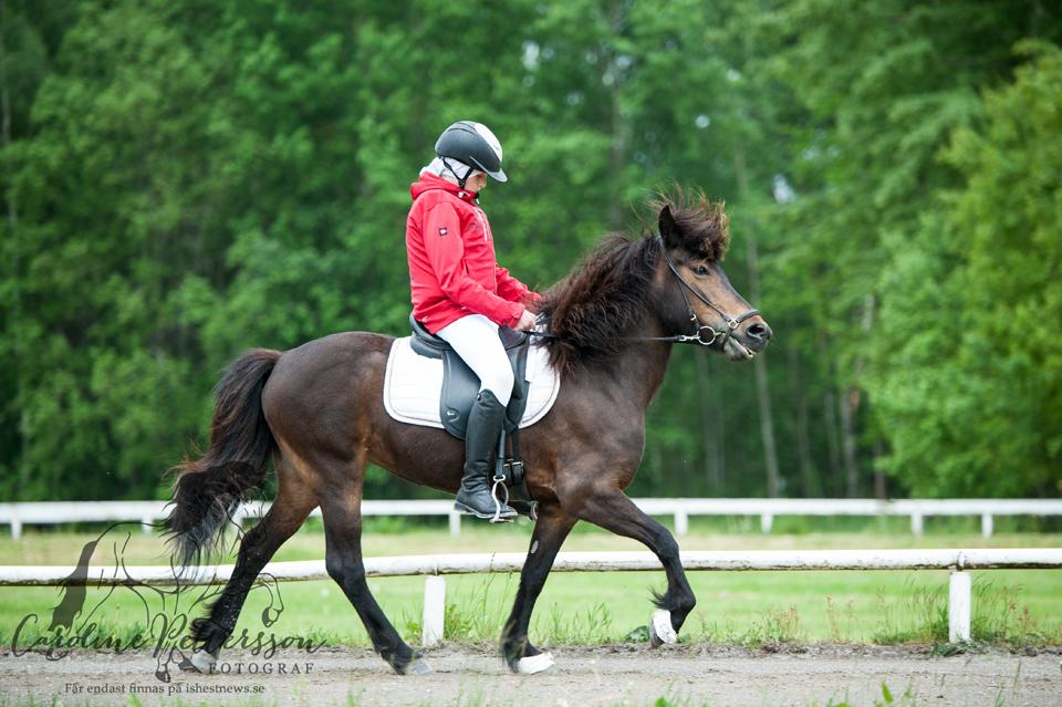 Edvin Klerdal på hästarna Hilda från Hillingstad Foto: Caroline Pettersson