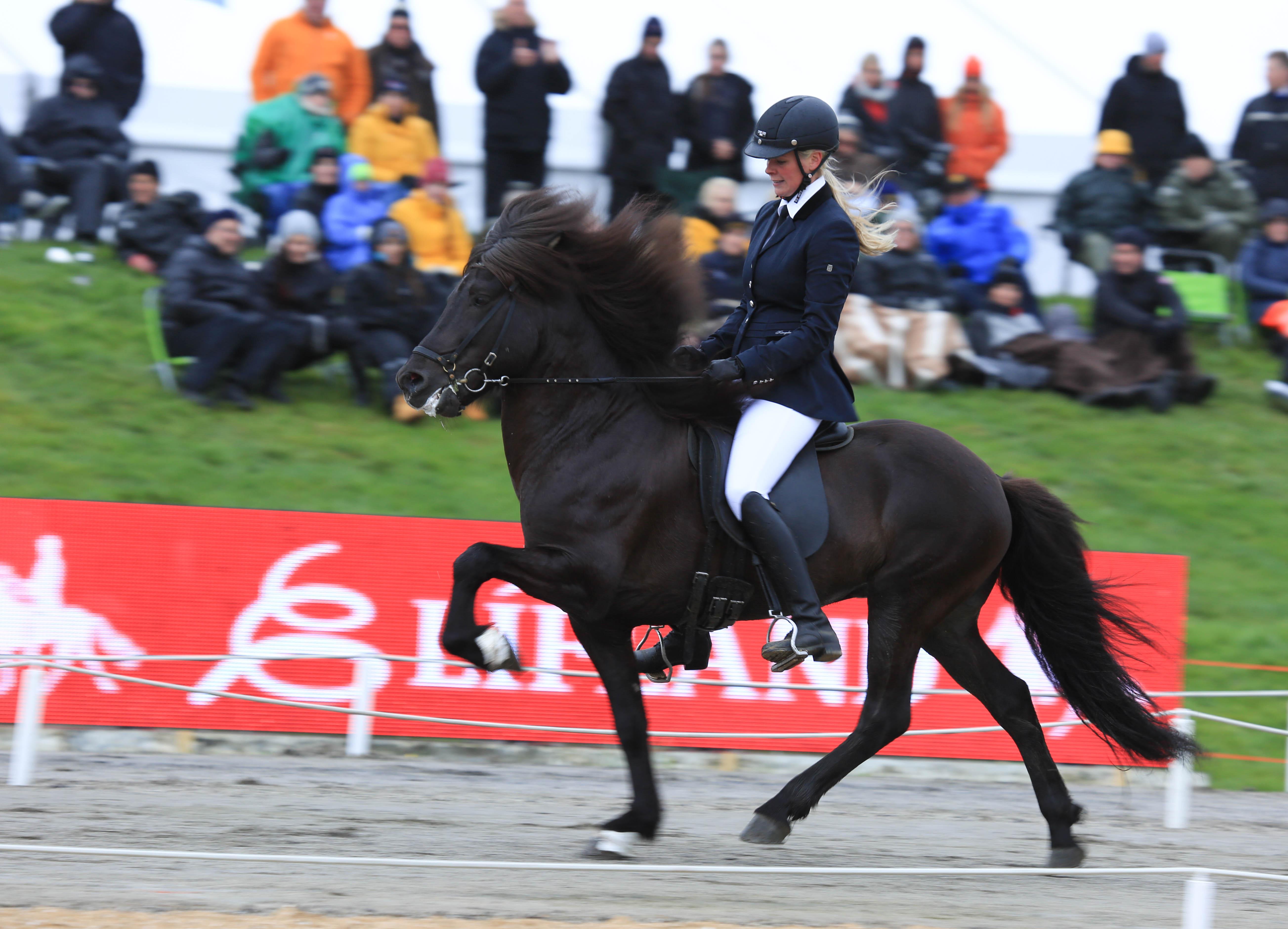 Frami och Elin ligger än så länge på tredje plats Foto: Yvonne Benzian/ishestnews.se