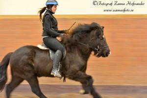 Frida Löfgren Suvanto på Fylkir från Hästabet Foto: Zanna Hofvander/Zannasfoto.se