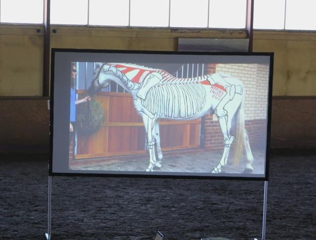 Vi fick se målade hästar på video Foto: Yvonne Benzian/ishestnews.se