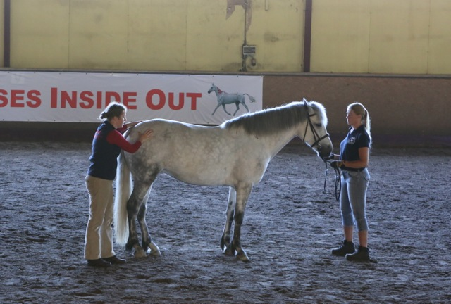 Pilates för hästar! Foto: Yvonne Benzian/ishestnews.se