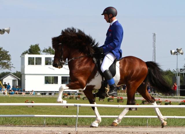 Herkules och Pegasus. Foto: Anette Alsterå/ishestnews.se