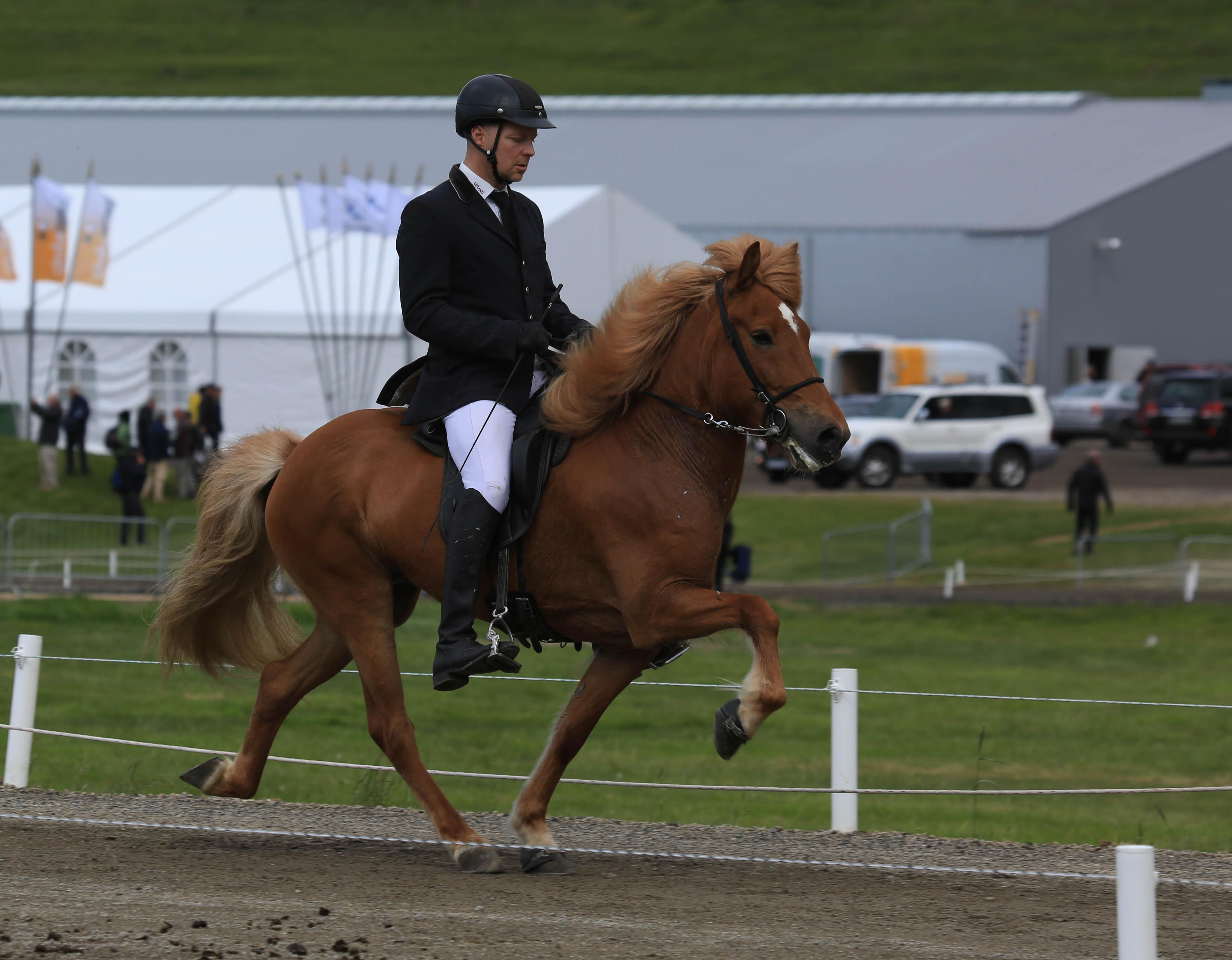 Hansa frá Ljósafossi, tvåa i klassen 6-åriga ston med 8.78 i ridegenskaper. Foto: Yvonne Benzian/ishestnews.se