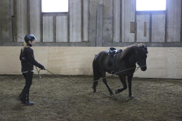 Träningen börjar från marken. Här är Heidrun med unghästen Rakel. Foto: Yvonne Benzian/ishestnews.se