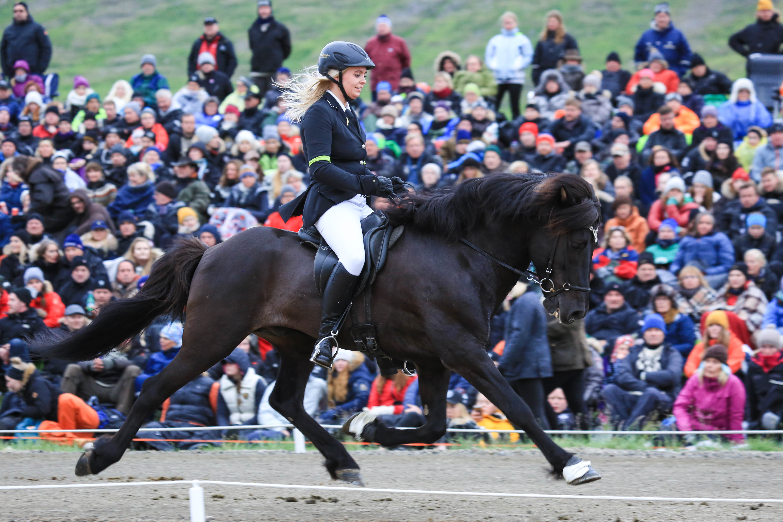 Hrannar visar sin enorma trav Foto: Yvonne Benzian/ishestnews.se