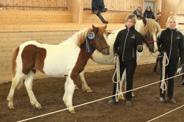 Hrisla från Stenholmen, bästa häst på Unghästchampionatet Foto: Eva Lodfeldt/Ishestnews.se