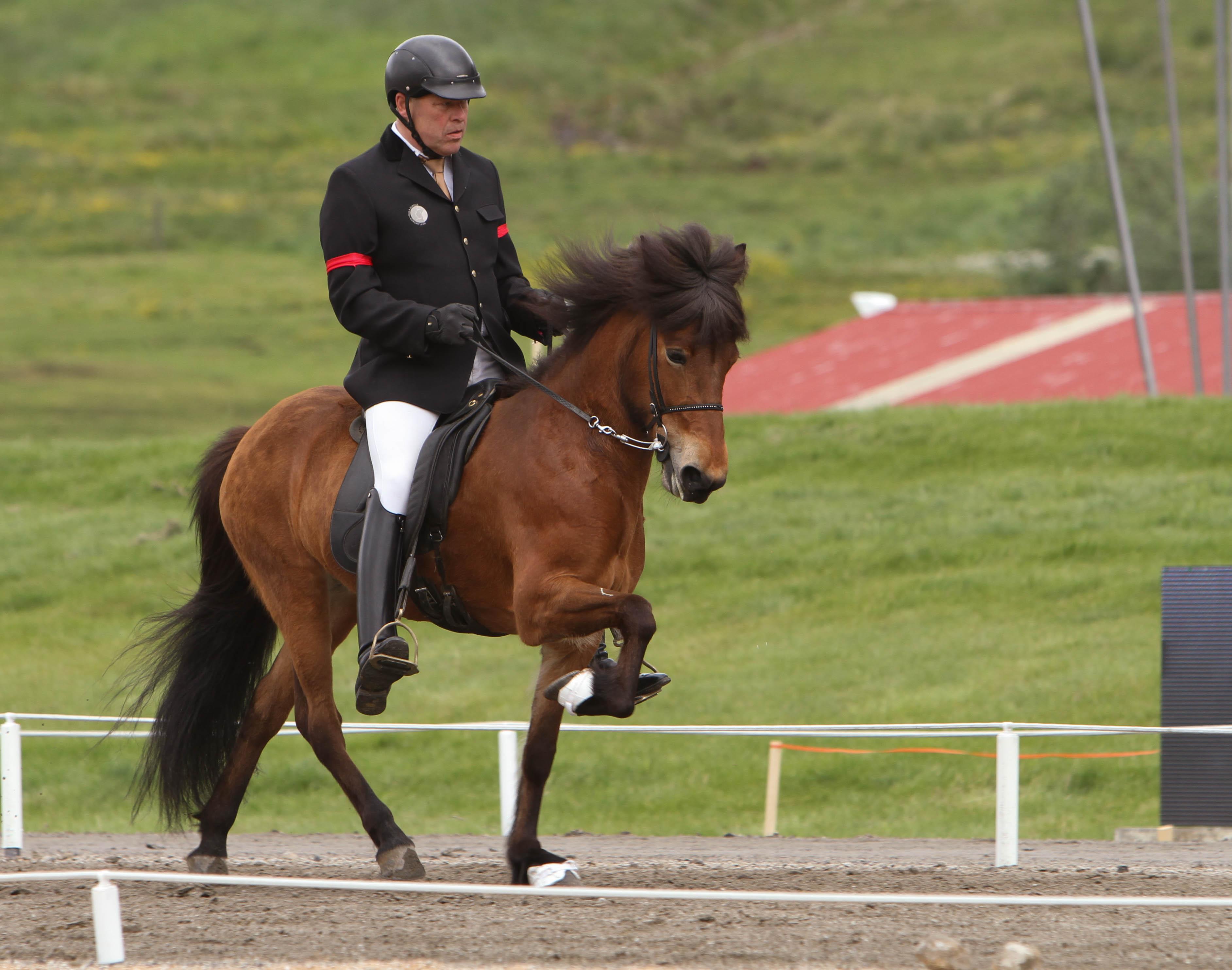 Stoet Katla och Bergur, på andra plats än så länge Foto: Karin Cederman/ishestnews.se