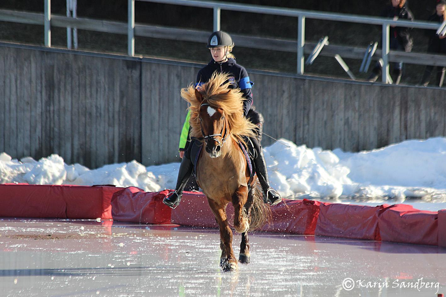 Kelly Eriksson på Balthasar från Sundsberg Foto: Karin Sandberg