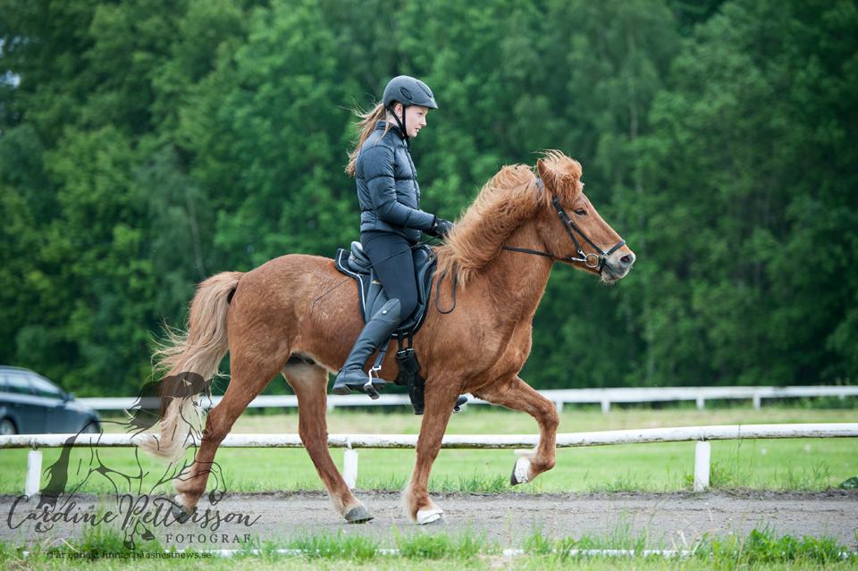 Lisa Blomdahl och hästen Gauti från Äppellunda Foto: Caroline Pettersson