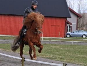 Óli Magnusson på Klaki frá Ós tog andraplatsen i fyrgången. Foto: Yvonne Benzian/Ishestnews