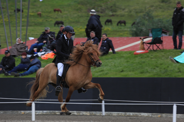 Blott 4 år och 8.71 i ridegenskaper. Sirkus frá Garðshorni á Þelamörk Foto: Yvonne Benzian/ishestnews.se
