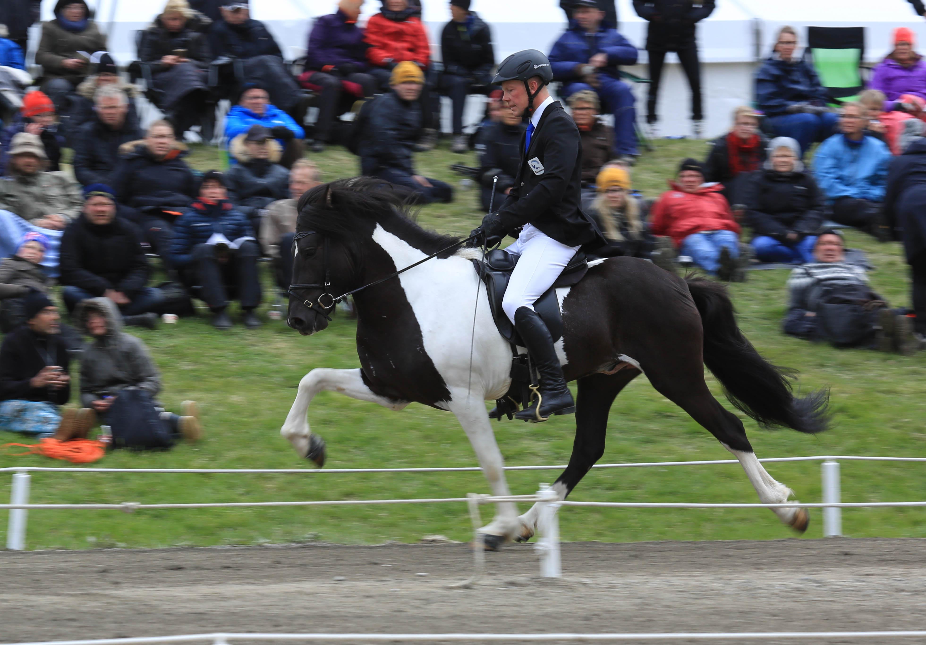 På tredje plats - Þráinn frá Flagbjarnarholti Foto: Yvonne Benzian/ishestnews.se