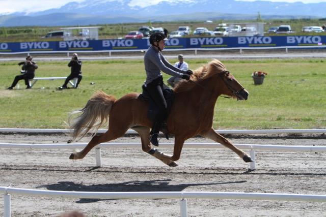 Vigdis vinner Speedpassen på Landsmót 2013. Passkanonhästen heter Vera frá Thórodsstödum. Foto. Karin Cederman/ishestnews-se
