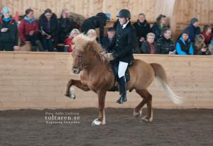 Kraftur och Vignir Foto: Sofie Lahtinen Carlsson
