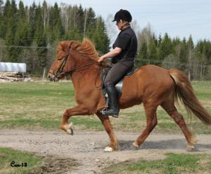 Nina tränar Glöd från Skärmäng inför visning. Foto: Christina Can Lindholm