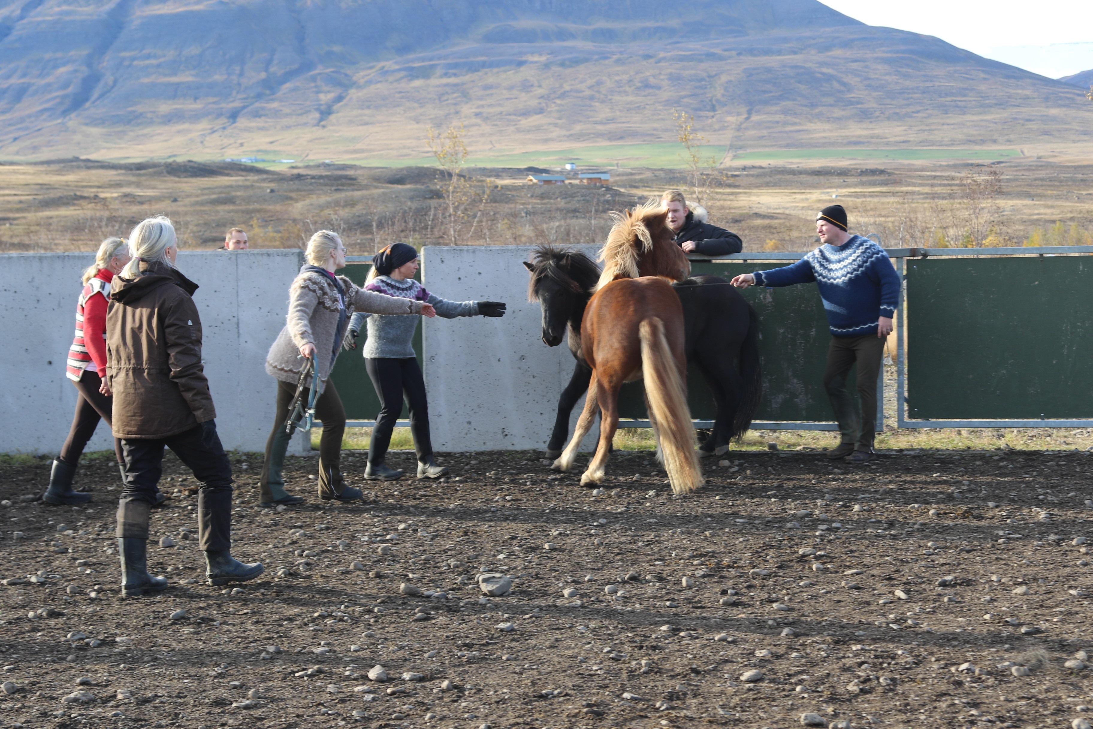 Hästarna ska till rätt ägare Foto: Sandra Marin/ishestnews.se